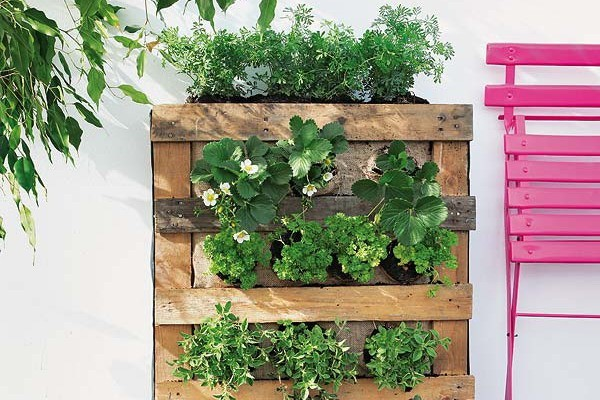 How to build a pallet vertical garden and a DIY plastic wall garden