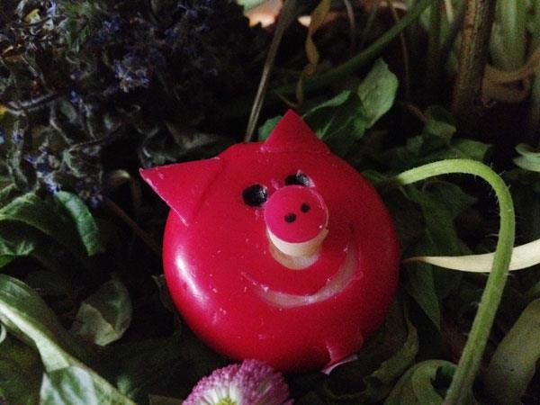 cute salat decoration babybel cheese piggy