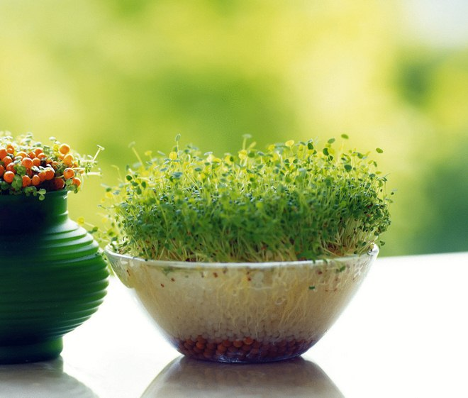 wrap-christmas-gift-cards-ideas-cress-glass-bowl