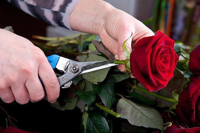 Valentine's day gift idea interesting decor project fresh red roses