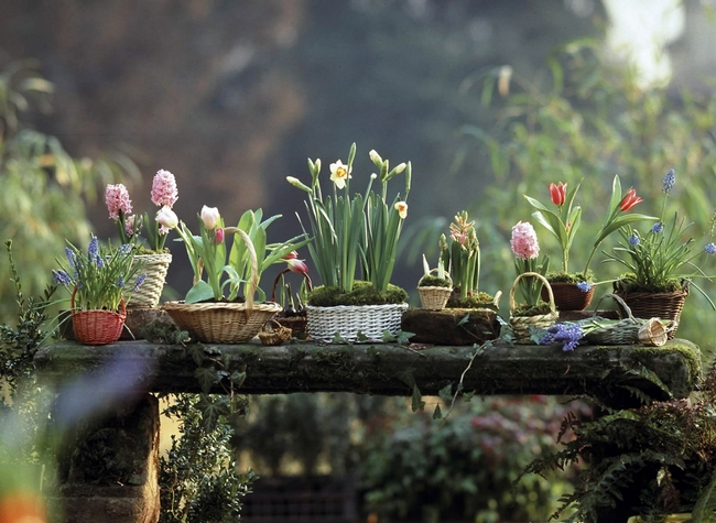 decorating home spring flowering bulbs arrangement baskets