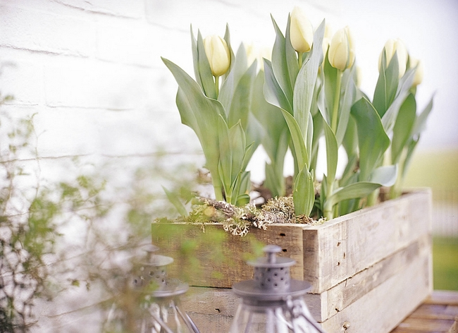 decorating home spring ideas blooming bulbs tulips wooden box