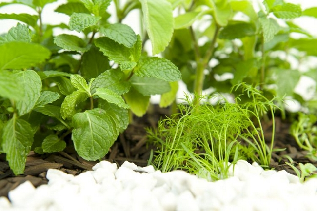 diy herb garden idea indoor kitchen tea apartment