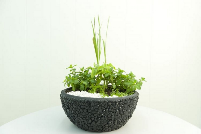 diy herb garden large container herbal tea fresh