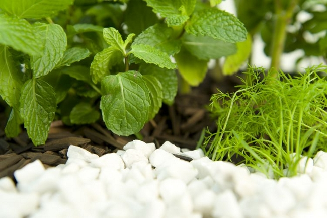 diy-herb-garden-idea-wood-shavings-white-glavel-decoration