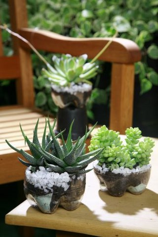fun plastic indoor pot plant bottle recycling