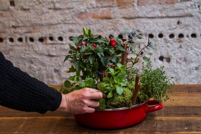 herb garden grow kitchen home vegetable garden small space