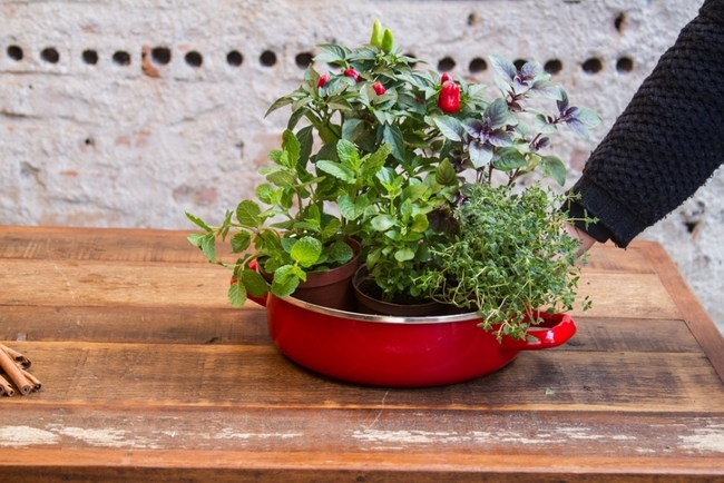 herb garden idea grow pepper mint basil kitchen enamel pot