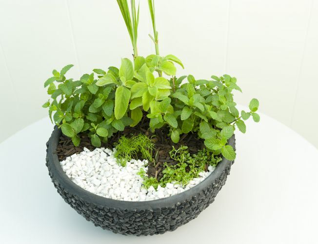 indoor diy herb garden idea home large container zen decor