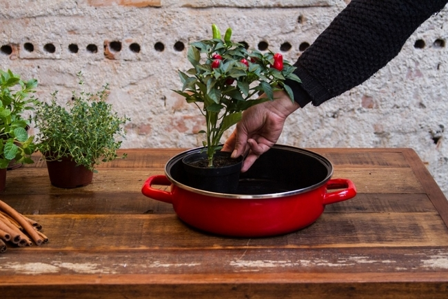 diy herb garden design grow chillies enamel pan