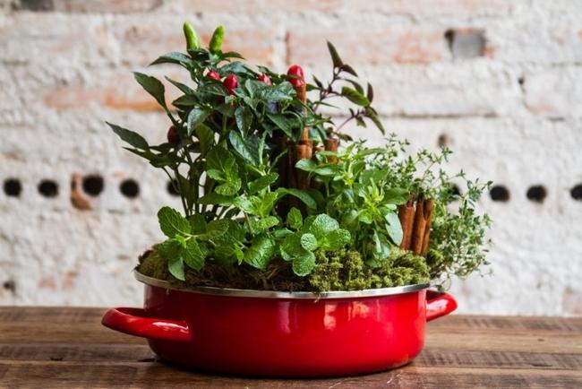 herb plants pots garden diy project growing herbs kitchen