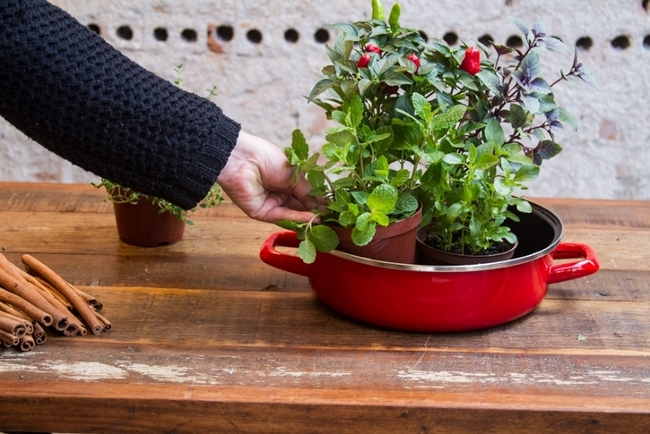 indoor herb garden grow kitchen enamel pan mint basel pepper