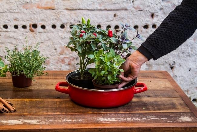 indoor herb garden grow kitchen ideas decorative aromatic