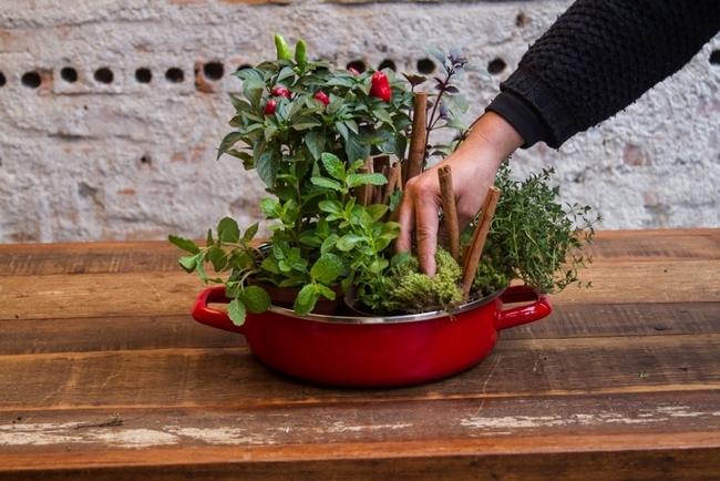 growing herb garden ideas kitchen pepper cinnamon sticks decoration