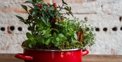 indoor-herb-garden-home-grow-kitchen-mint-basel-moss