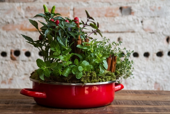 indoor-herb-garden-home-grow-kitchen-mint-basel-moss