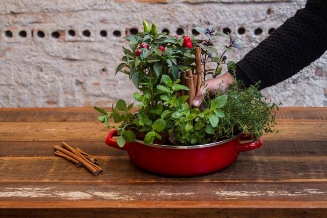 home herb garden kitchen fresh herbs cinnamon sticks decoration