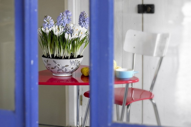 kitchen spring decor flower pot white crocuses purple hyacinths
