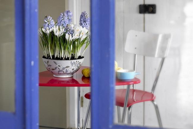 kitchen spring decor flower pot white crocuses purple hyacinths