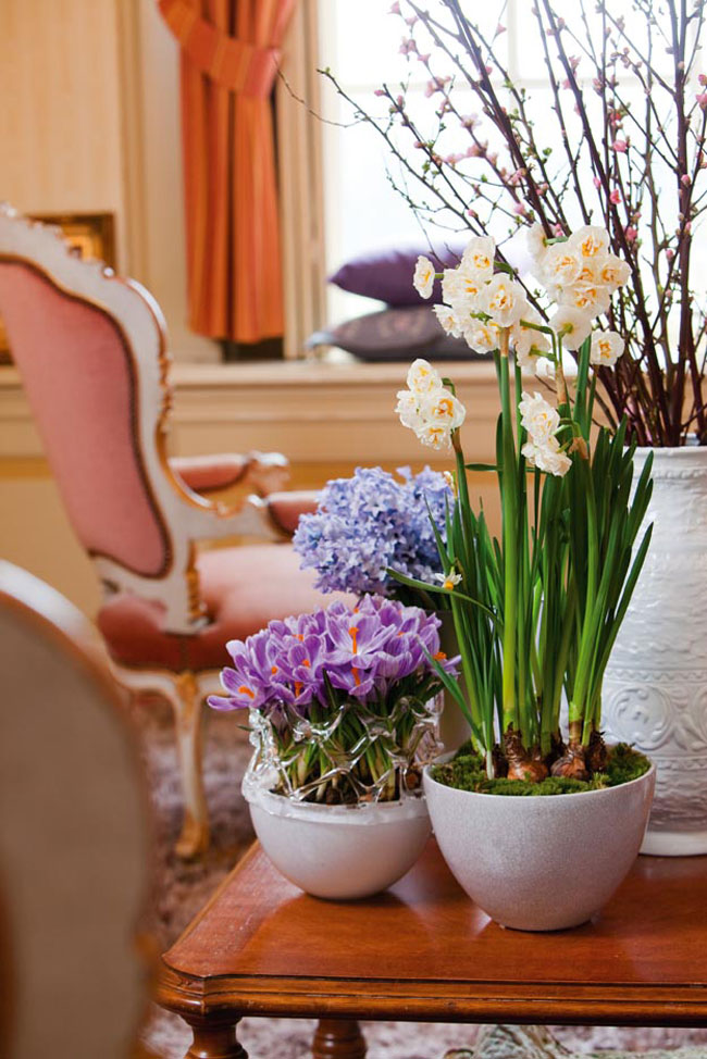 spring decorating home flowering bulbs pots crocus blooming branches
