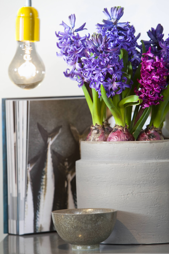 spring decorating ideas home blooming bulbs pot purple hyacinths
