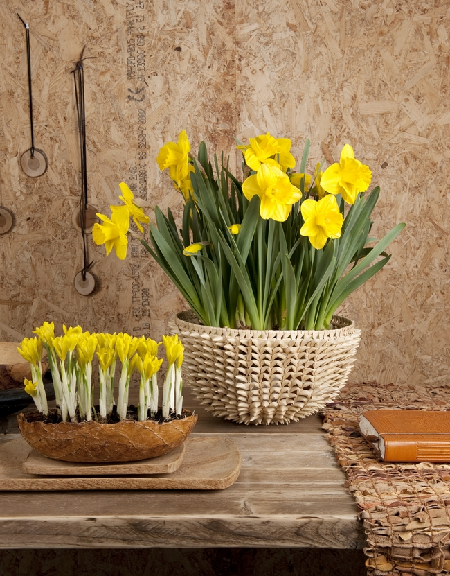 Spring Decorating Ideas For The Home Part - 49: Spring Decorating Ideas Home Bulbs Crocuses Daffodils Sunny Yellow
