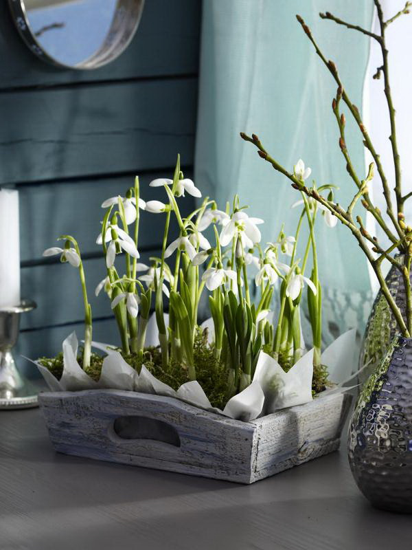 spring decorating ideas home bulbs snowdrops wooden tray moss arrangement