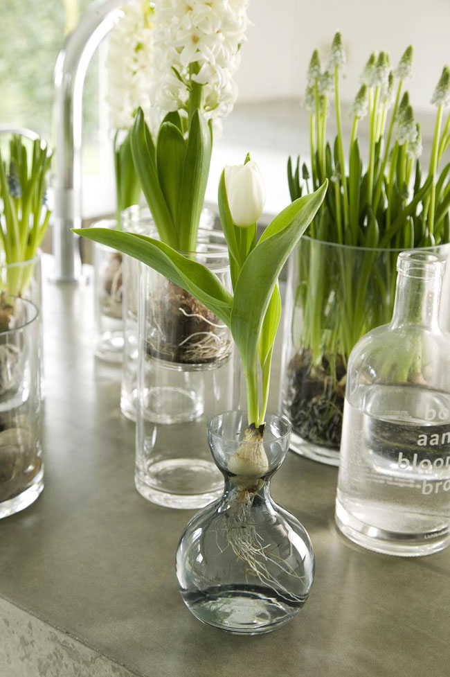 Spring Decorating Ideas Refresh Your Home With Flowering Bulbs