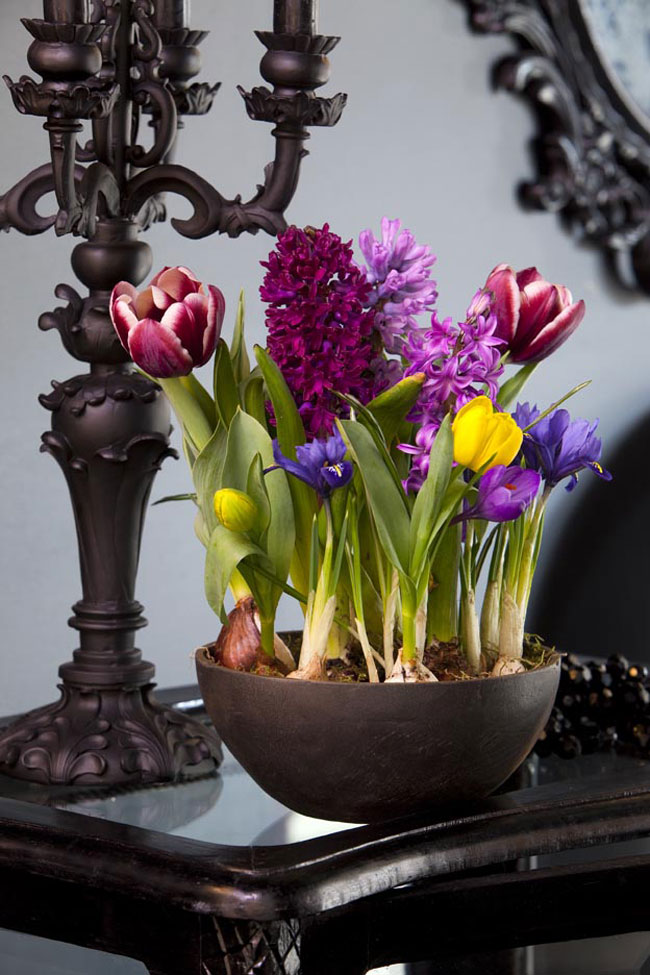 spring decorating ideas home centerpiece potted bulbs tulips crocus hyacinths