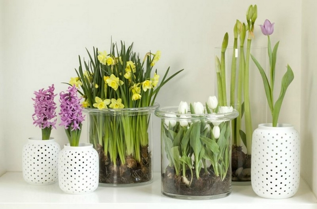 spring decorating ideas home flowering bulbs daffodils tulips hyacinths - Spring Decorating Ideas
