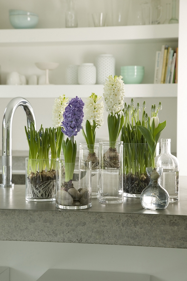 spring decorating ideas home flowering bulbs glass vases hyacinths