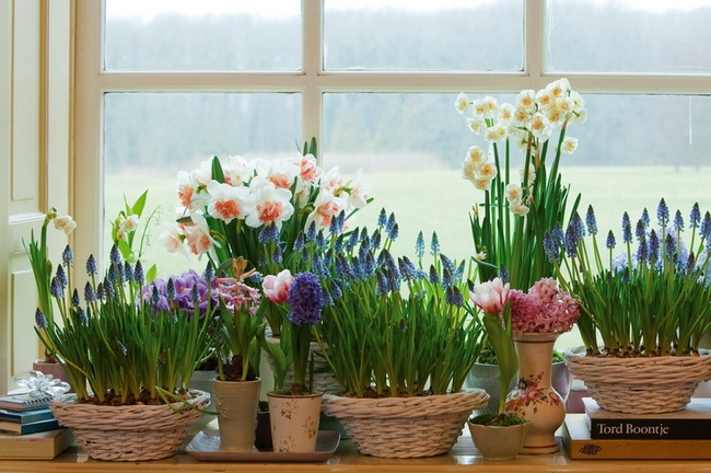 Spring Decorating Ideas Home Spring Blooming Bulbs Window Sills Baskets