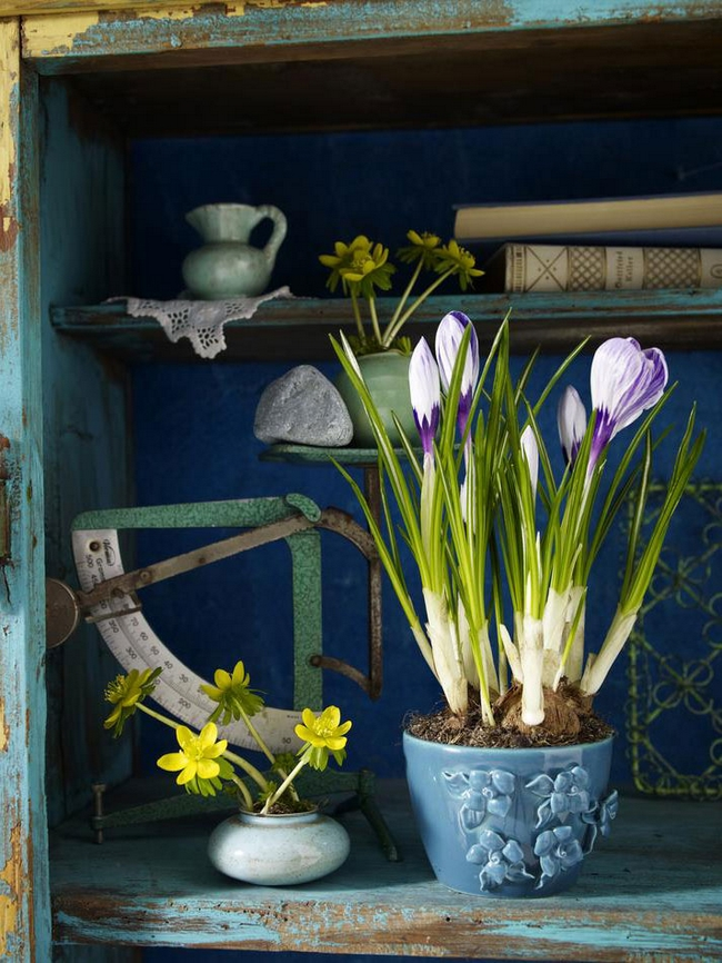 spring decorating ideas potted crocus country style