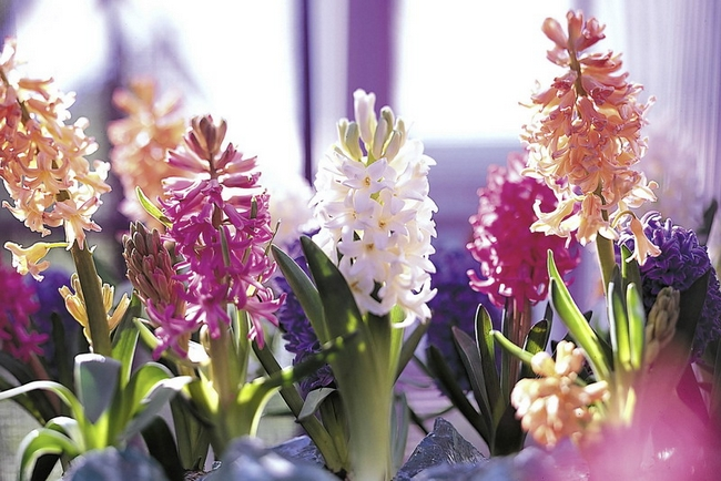 spring flowering bulbs home decor centerpieces hyacinths
