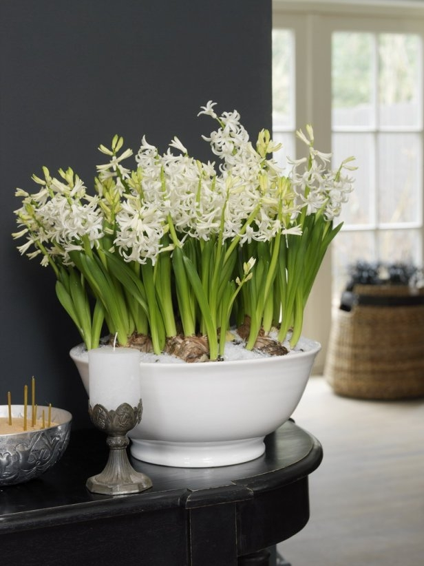 Spring decorating ideas refresh your home with spring flowering bulbs spring flowering bulbs home decor white hyacinths potted bowl mightylinksfo