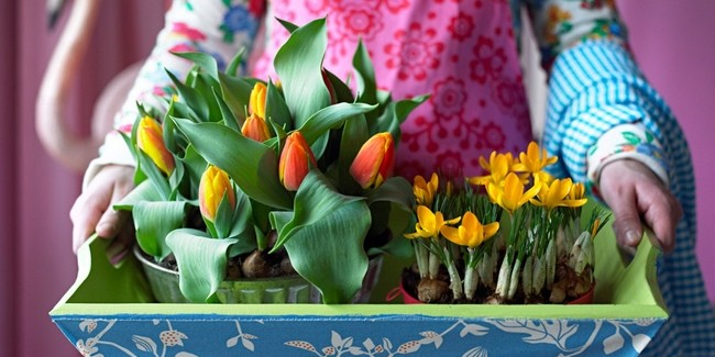 Spring decorating ideas -Refresh your home with spring flowering bulbs