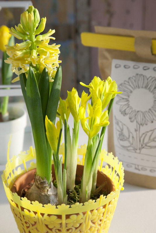 spring home decorating ideas centerpiece yellow bulbs hyacinths iris