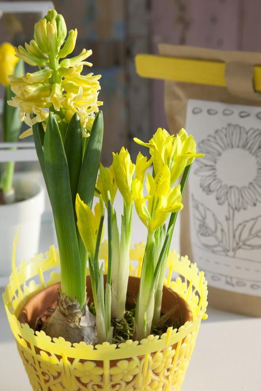 spring home decorating ideas centerpiece yellow bulbs hyacinths iris