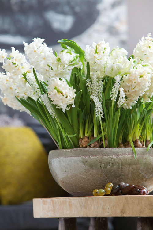 White Tulips In Vase Flower Arrangements