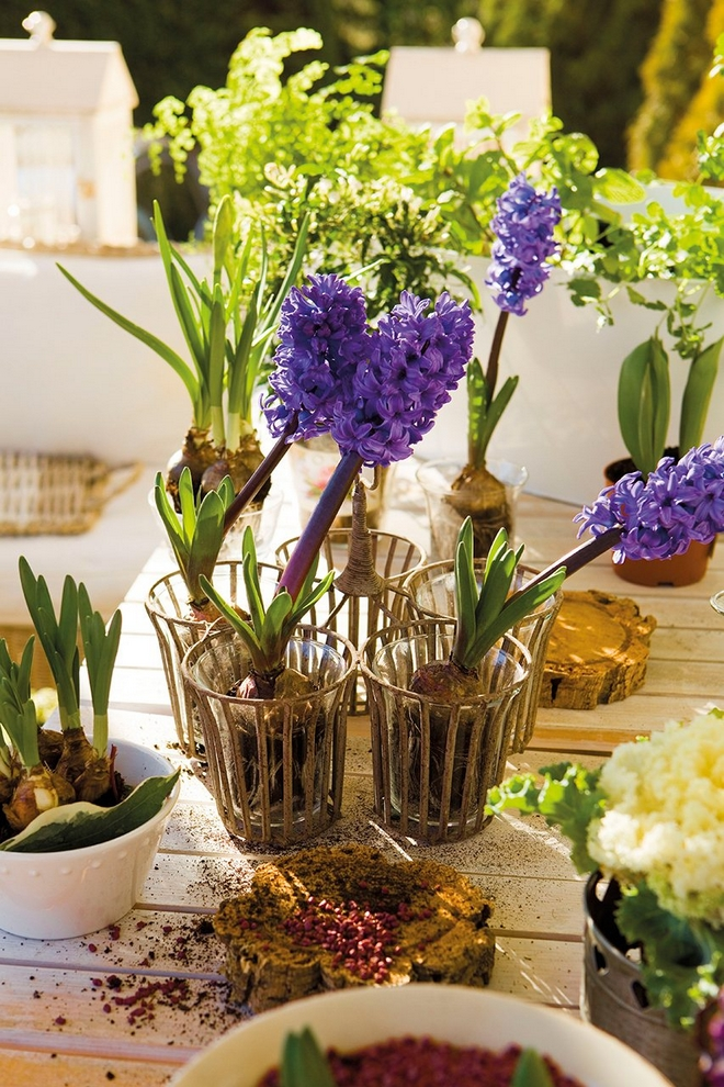 DIY Spring Table Decorations Flowering Bulbs Purple Hyacinths