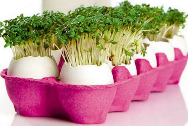 Egg shell vases for cress in pink carton