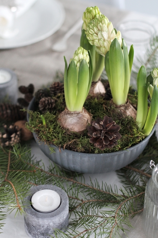 scandinavian style fir branches wood candlestick young bulb flowers christmas table setting ideas