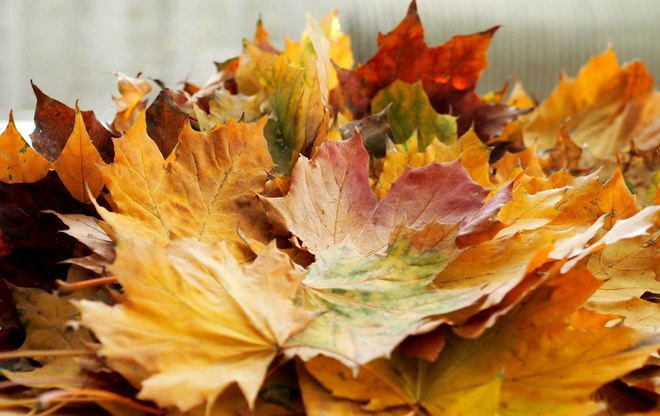 fall-leaf-crafts-adults-thanksgiving-rose-bouquet-maple-leaves