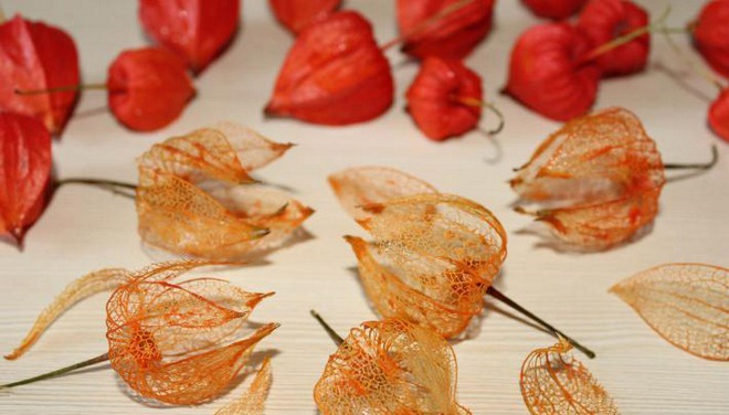 natural-fall-decorations-how-make-physalis-skeletons