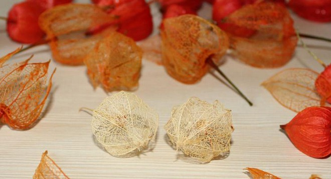 natural-fall-decorations-physalis-skeletons-tutorial