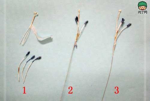 gladiolus-stamens-steps