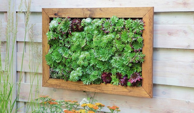 diy-garden-ideas-on-a-budget-sempervivum-garden-plants-wall-picture