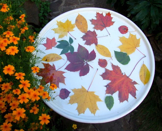 outside-diy-natural-fall-decorations-table-top-herbarium-with-fresh-autumn-leaves