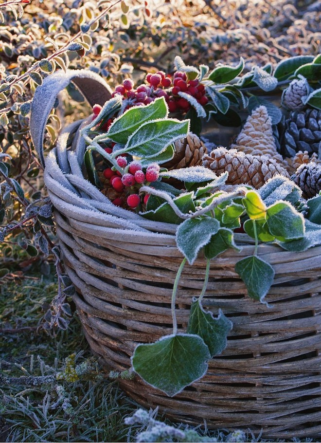 ideas for outdoor christmas decor basket filled with forest and garden finds winter composition