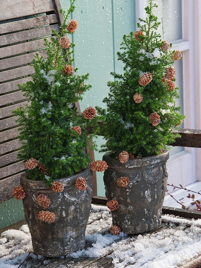 outdoor christmas porch decoration small yew tree decorated with garland of cones